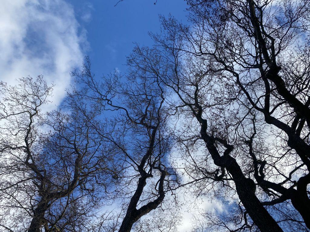 kuva taivaalta, edessä oksia ja puita